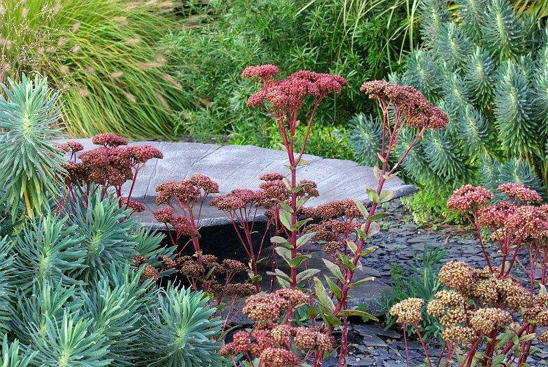 Au jardin contemporain for Photo jardin contemporain