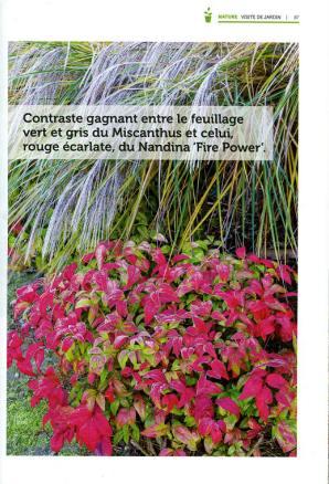 Entre voisin - Mr.Bricolage - reportage du Jardin Hillen 2018